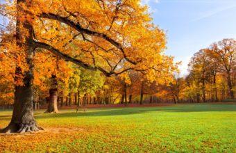 Trees Meadow Park Park Foliage 2880 x 1800 340x220