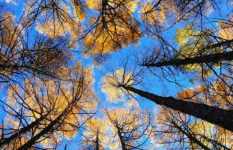 Trees Sky View From Below 1440 x 900 340x220