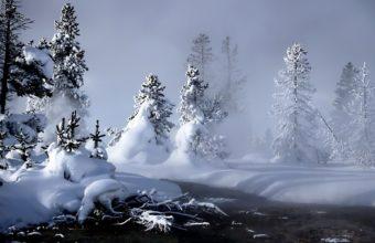 Trees Snow 1920 X 1200 340x220