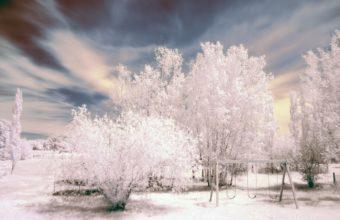 Trees Snow Winter 1440 X 900 340x220
