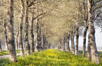 Trees Summer Landscape 1920 x 1080 340x220