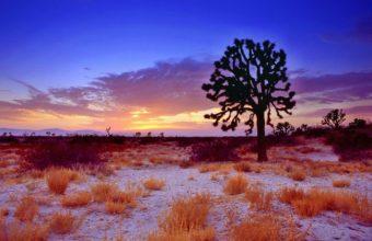 Trees Sunset Grass 1440 x 900 340x220