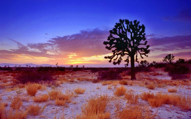 Trees Sunset Grass 1440 x 900 768x480