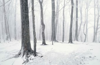 Trees Winter Snow 2560 X 1600 340x220