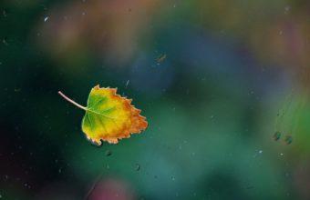 Water Drops Leaf Glass Autumn 1920 X 1200 340x220