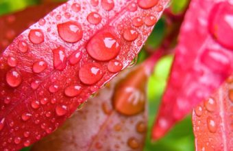 Water Drops On Leaves 1600 x 1200 340x220