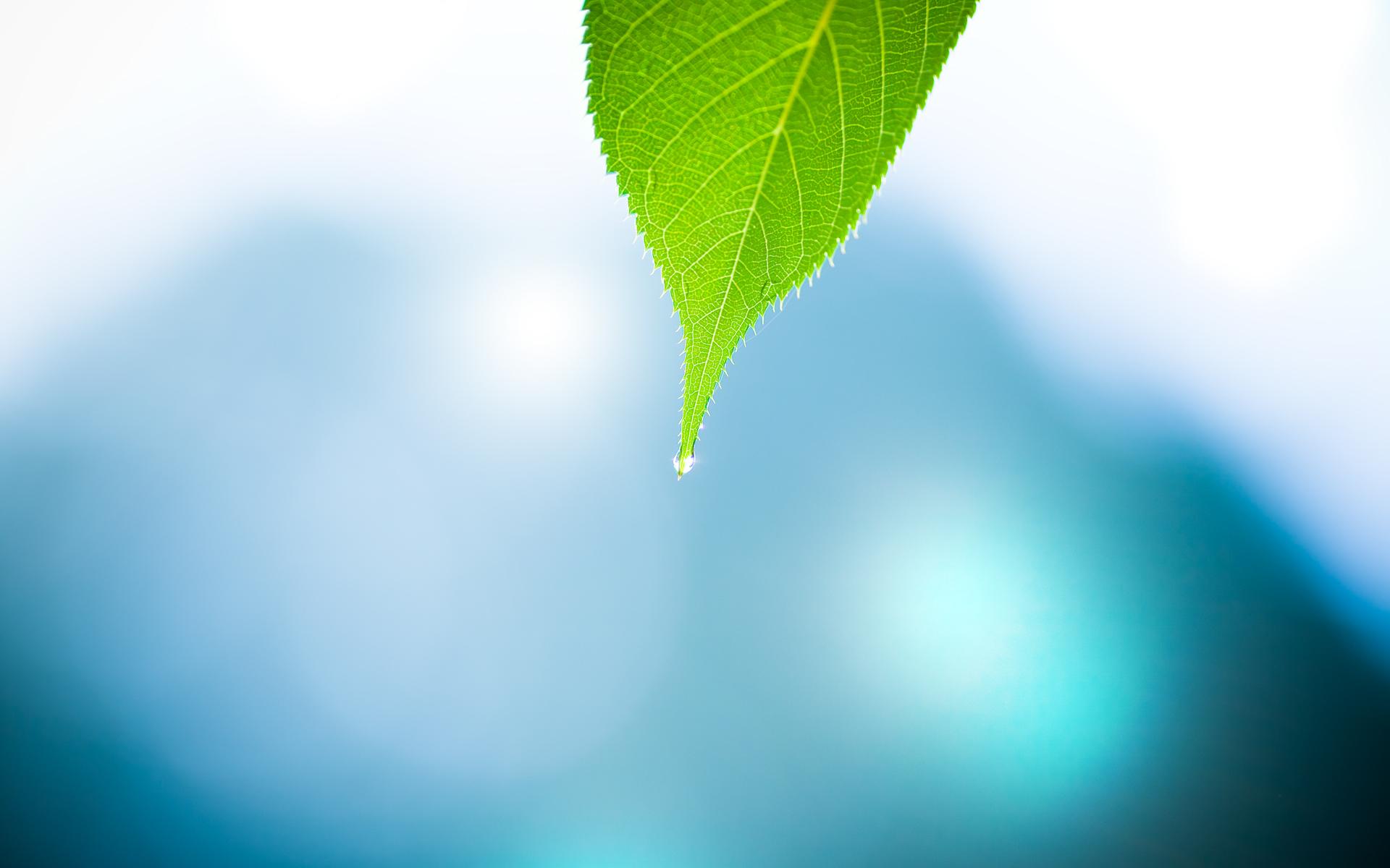 Water Nature Leaf Minimalistic Water 1920 X 1200