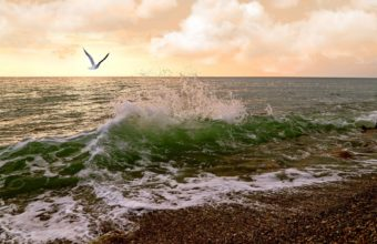Waves Sea Sunset Birds Ocean 1920 x 1200 340x220