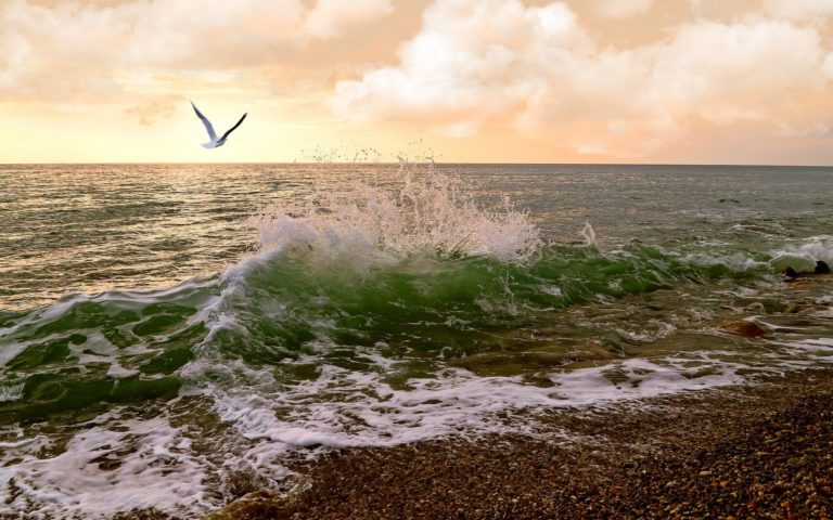 Waves Sea Sunset Birds Ocean 1920 x 1200 768x480