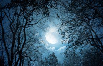 White Autumn Night 2560 X 1600 340x220
