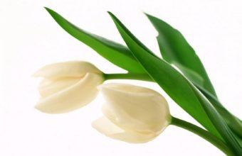 White Buds 1600 x 1200 340x220