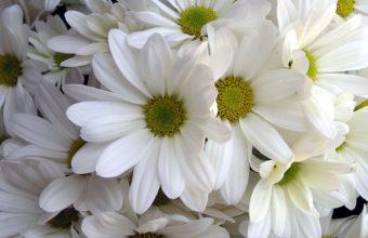 White Lilys 1920 x 1200 340x220