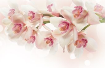 Pink flower wallpapers hd white orchid flowers pink g 2560 x 1600 340x220 mightylinksfo