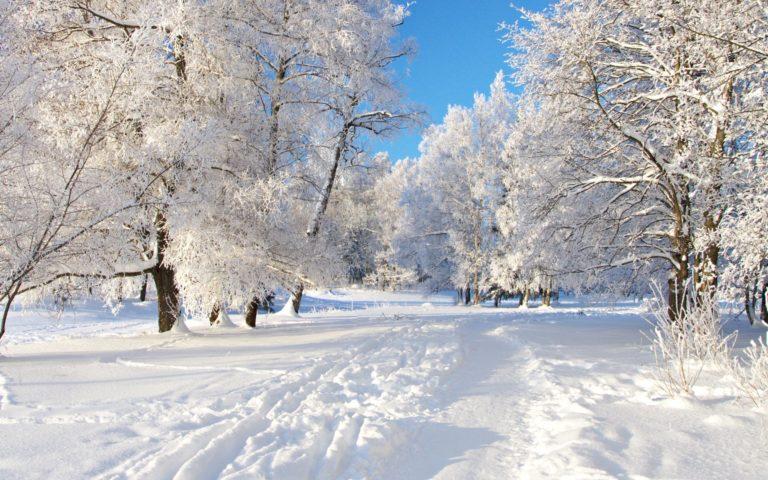 White Winter Scenery 1920 x 1200 768x480