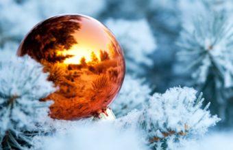 Winter Branches Snow 5321 X 3833 340x220