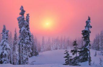 Winter Decline Coniferous Forest 1920 x 1080 1 340x220