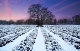 Winter Field Ranks 2560 X 1700 340x220