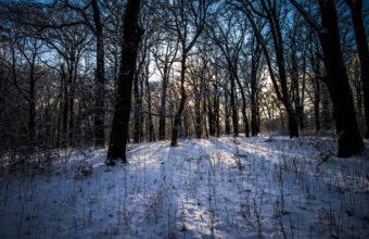 Winter Forest Landscape 2000 x 1333 340x220