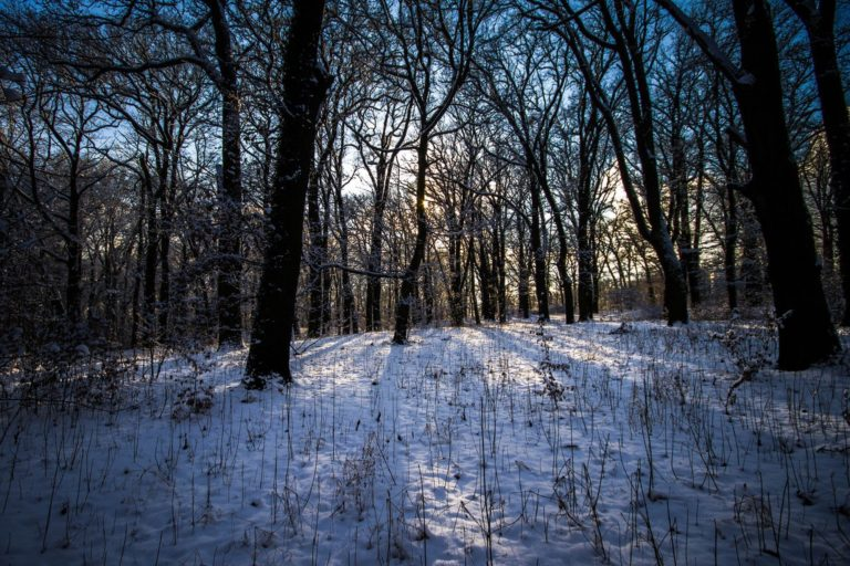 Winter Forest Landscape 2000 x 1333 768x512