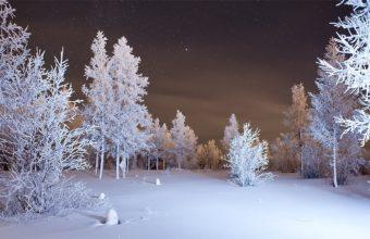 Winter Forest Snow 1920 X 1200 340x220