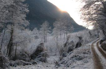 Winter Hoarfrost Gray Hair 3072 x 1728 340x220