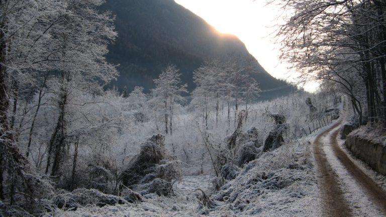 Winter Hoarfrost Gray Hair 3072 x 1728 768x432