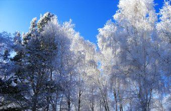 Winter Hoarfrost Trees 1900 x 1188 340x220