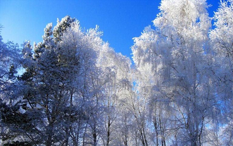 Winter Hoarfrost Trees 1900 x 1188 768x480