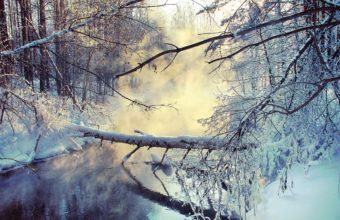 Winter Lake Tree 2560 x 1600 1 340x220