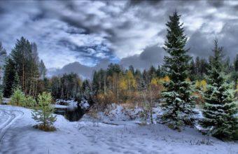 Winter Snow Fir Trees 1920 x 1145 340x220