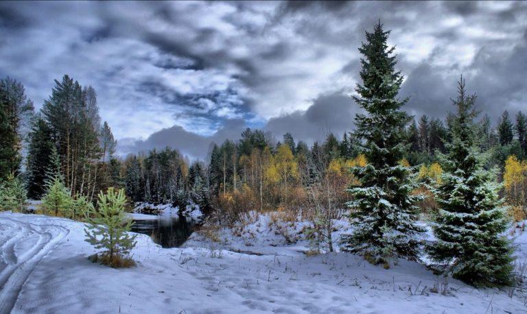 Winter Snow Fir Trees 1920 x 1145 768x458