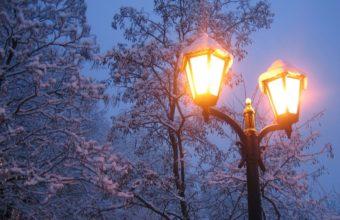 Winter Snow Light Trees 1200 x 900 340x220