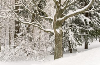 Winter Snow Tree 2560 X 1600 340x220