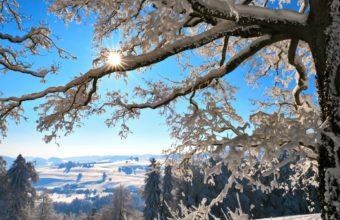 Winter Sun Branches 1680 x 1050 340x220