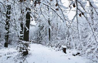 Winter Track Snow 1920 x 1200 1 340x220