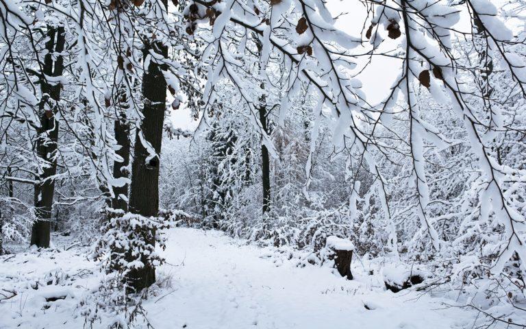 Winter Track Snow 1920 x 1200 768x480