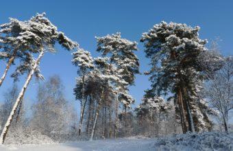 Winter Trees Snow Sky 2560 X 1440 340x220