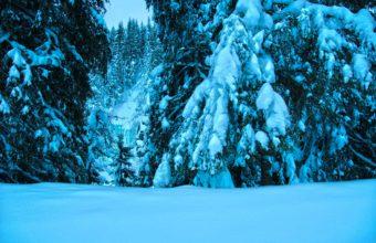 Winter Trees Spruce 4274 x 2841 1 340x220