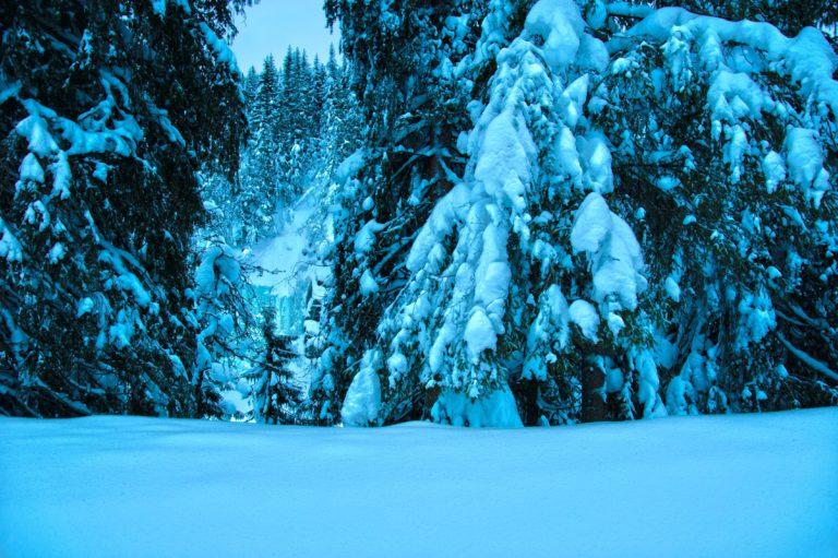 Winter Trees Spruce 4274 x 2841 768x511