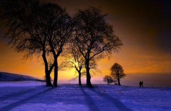 Winter Trees Sunset 2560 x 1600 340x220