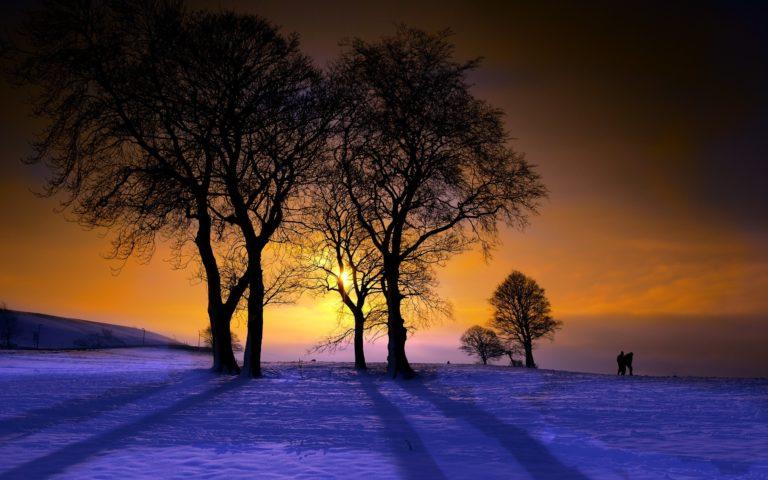 Winter Trees Sunset 2560 x 1600 768x480