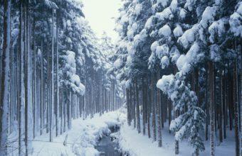 Winter Trees Wood 1920 x 1200 1 340x220