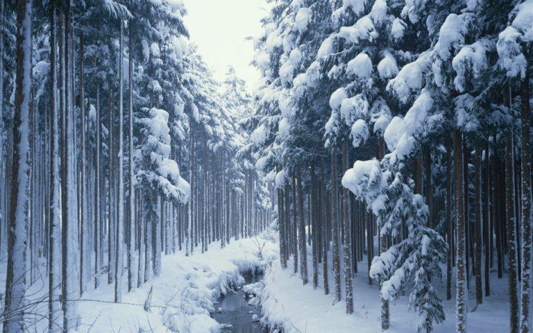 Winter Trees Wood 1920 x 1200 768x480