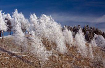 Winter White Trees 1680 x 1050 340x220
