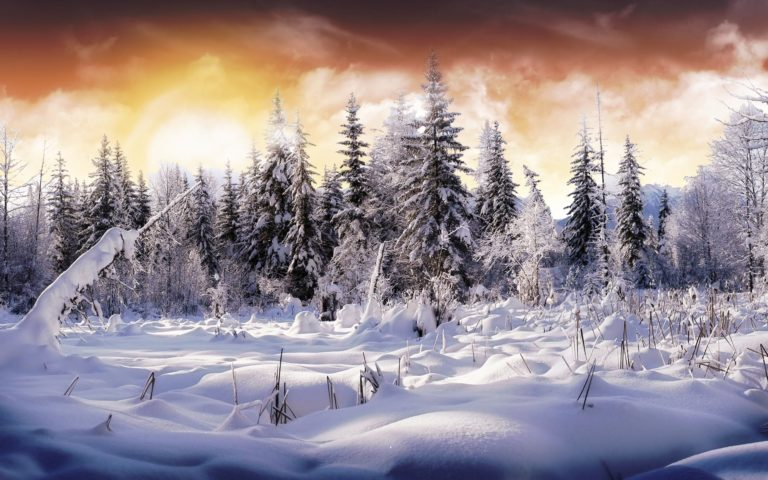 Wonderful Winter View 1920 x 1200 768x480
