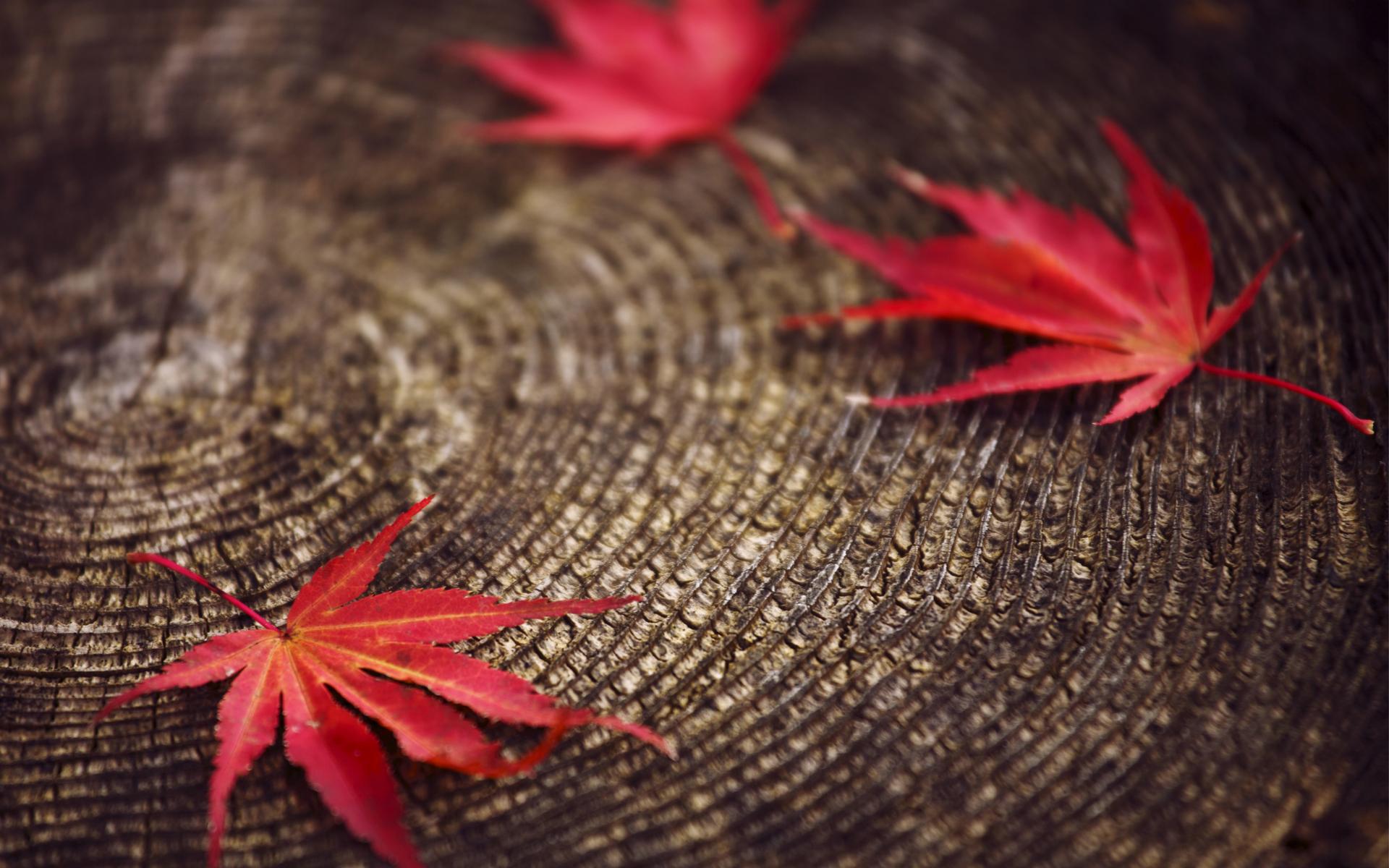 Красный листок скачать