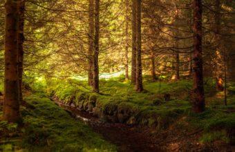 Wood Trees Stream 1440 x 900 340x220