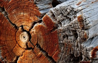 Wood Wallpapers 36 1800 x 1191 340x220