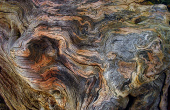 Wood Wallpapers 46 2048 x 1365 340x220