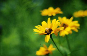 Yellow Summer Flowers 2560 x 1600 340x220